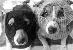 "[Barrio Canino nº 180] ""Aprendiendo a obedecer"" en Radio Ágora Sol"