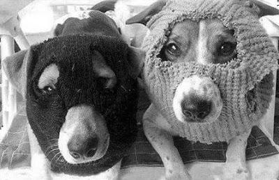 [Barrio Canino nº 180] «Aprendiendo a obedecer» en Radio Ágora Sol